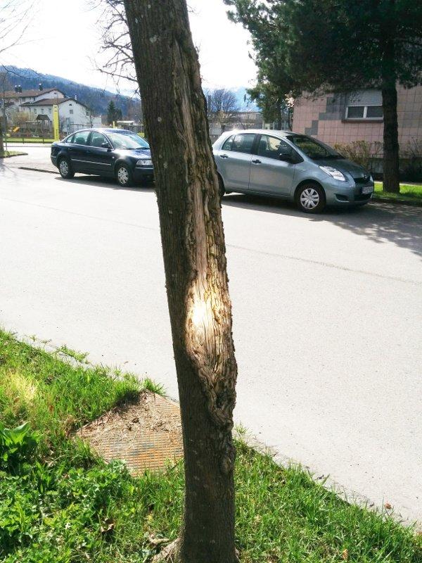 Baum nah