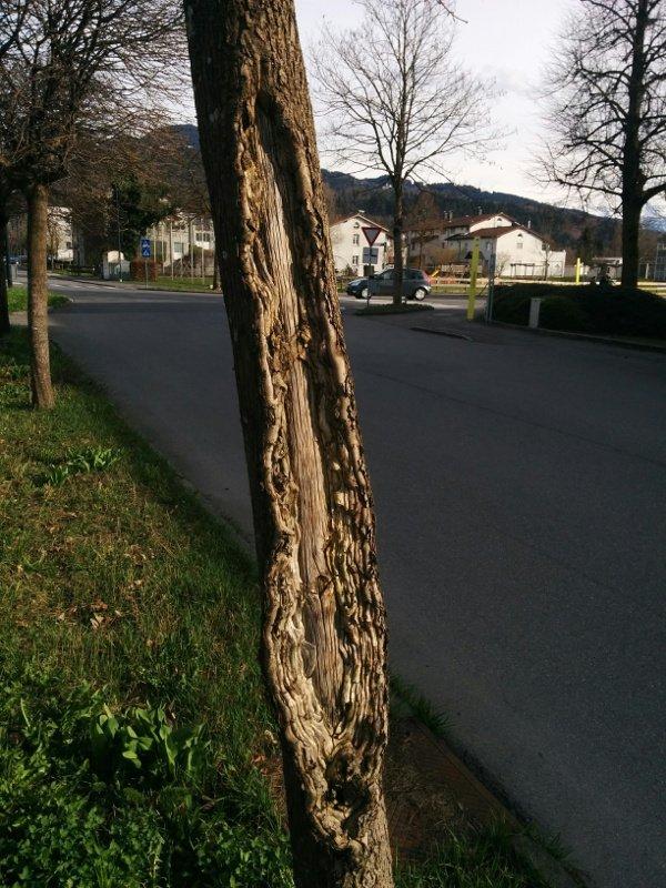 Baum nah ohne Sonne